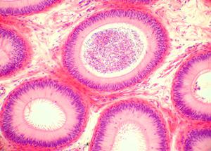 Delta State University BIO 423/523 Histology Lectures