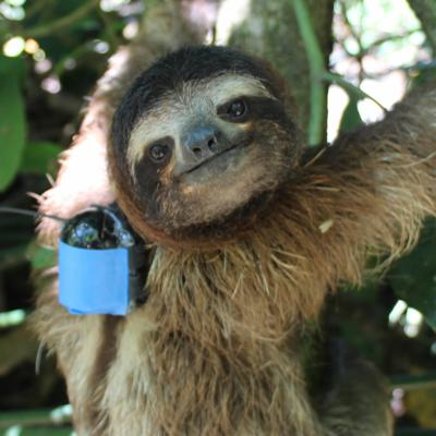 Cover art for Why Are Sloths Wearing Tiny Backpacks?