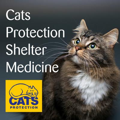 Cover art for Approach to feline behaviour in a shelter setting