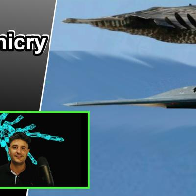 Cover art for Biomimicry 101 | Innovation inspired by nature (10 Biomimicry exampls)