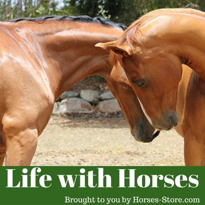 Life with horses