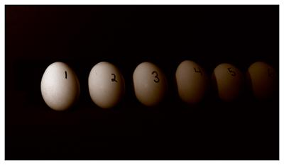 Cover art for Shorts: A Chick's Guide to the Number Line
