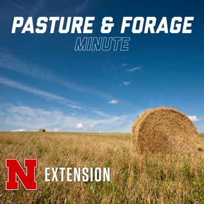 Pasture and Forage Minute