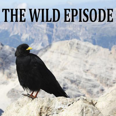Cover art for Alpine Chough : The Black Feather of the Neanderthals