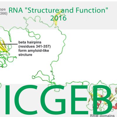 Rna Structure and Function 2016