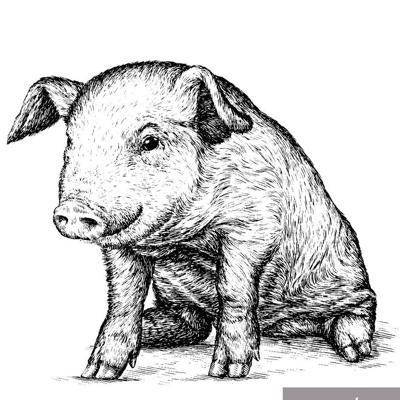 Cover art for Truffle Pigs