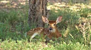 Cover art for Wildlife Update: Spring Babies