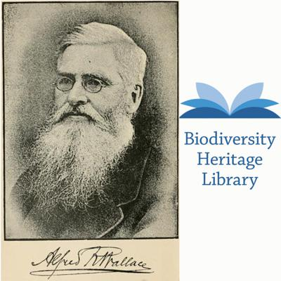Celebrating Alfred Russel Wallace