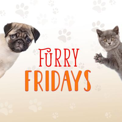 Furry Fridays on the Point