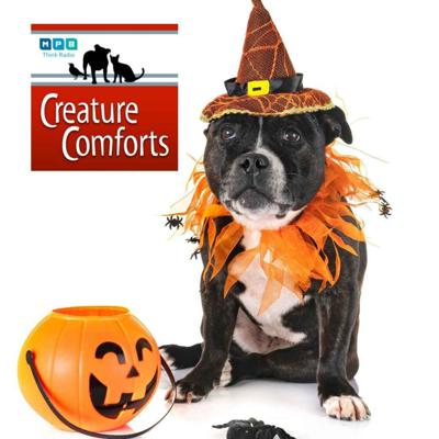 Cover art for Creature Comforts | Halloween Pet Day