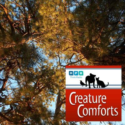 Cover art for Creature Comforts | Autumn Sightings