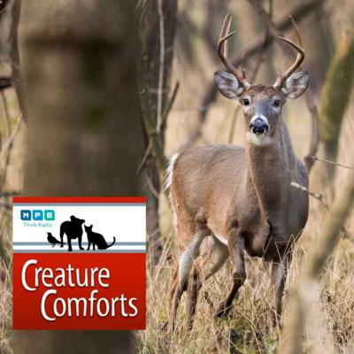 Cover art for Creature Comforts | Autumn Deer