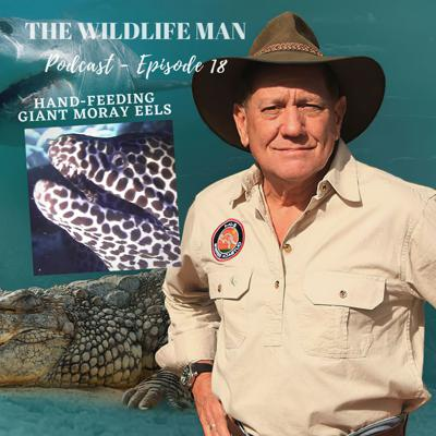 Cover art for The Wildlife Man Podcast - Episode 18 - Hand-Feeding Giant Moray Eels