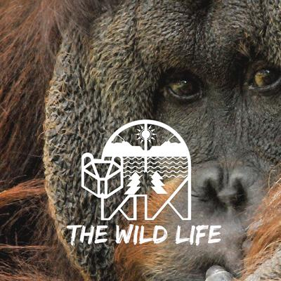 Cover art for Orangutan Conservation with Leif Cocks