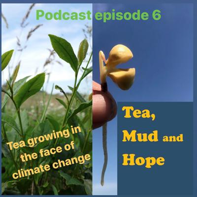 Cover art for Tea Growing in the face of climate change