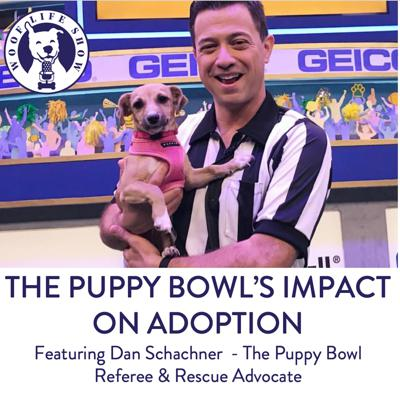 Cover art for Fluff vs. Ruff - The Puppy Bowl's Impact on Adoption - A Conversation with Dan Scachner the Puppy Bowl Ref