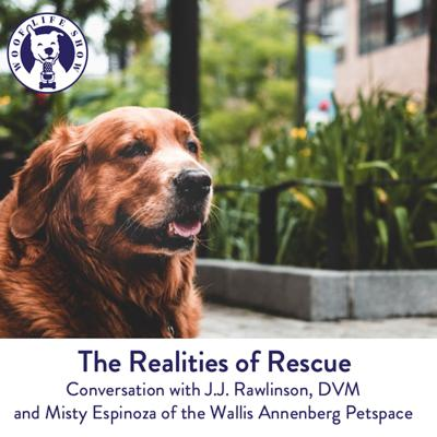 Cover art for The Wallis Annenberg Petspace: Realities of Rescue & Considering a Senior Pet