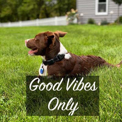 Welcome to Good Vibes Only: Dog Series. We are breaking this into 4 segments of advice, tips, and tricks to help you establish a strong relationship with your puppy from the very beginning. Listen each week for each topic!Background:I have been working with dogs for twenty years and rescue with A Rejoyceful Animal Rescue for 10 years. As a family, I have fostered over 70 dogs and continue to help the dog community as much as I can.Episode Breakdown:Your New PuppyPuppy SocializationMy Favorite Dog ProductsTraining Commands
