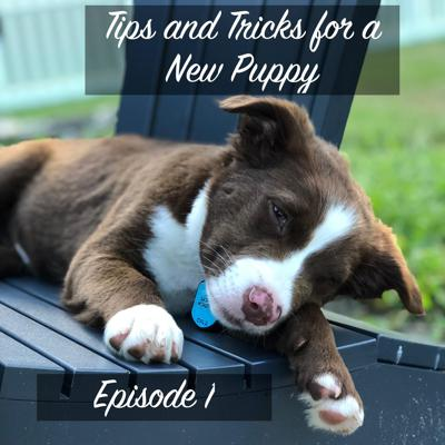 Cover art for Episode 1: Tips and Tricks for a New Puppy