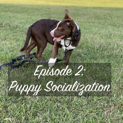 Cover art for Episode 2: Puppy Socialization