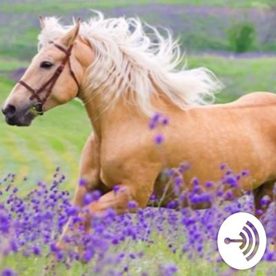 Why do horses stand sleeping?