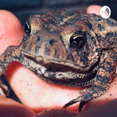 Amazing American toad care