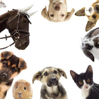 This Podcast is full of facts and tips about all sorts of pets, from cats and dogs to horses and hamsters! It contains lots of information pet parents and people that are thinking of getting a pet need to know. There is a new podcast twice a week!