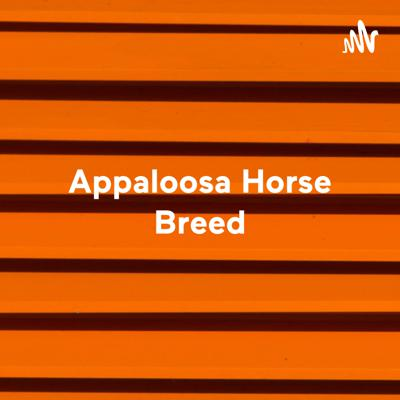 Appaloosa Horse Breed - The Most Beautiful Breed in the World