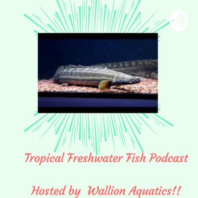 Tropical Freshwater fish Podcast. (TFF Podcast)
