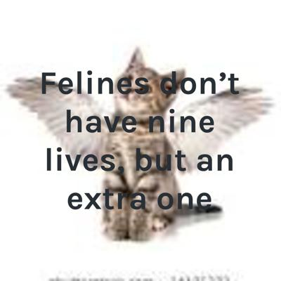 Felines don't have nine lives, but an extra one