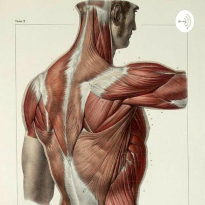 Fascia Distortion Model Therapy In Pain Management.