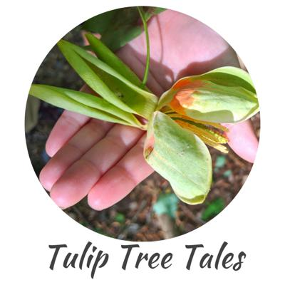 Tulip Tree Tales - Storytelling Podcast for Children