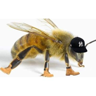 Yankee Fitted N'Timbs Chat