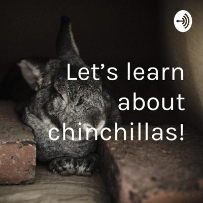 Today, on my FIRST PODCAST EVER... (WHAT?!!!!) we will be learning about the lovable animal, the chinchilla, along with spooky music and random laughter.  Also, sorry guys, but I left out a KEY POINT! The main reason we couldn't hold chinchillas at the zoo was because they can jump like seven feet! Yup, yowza! I do not represent the SF Zoo.