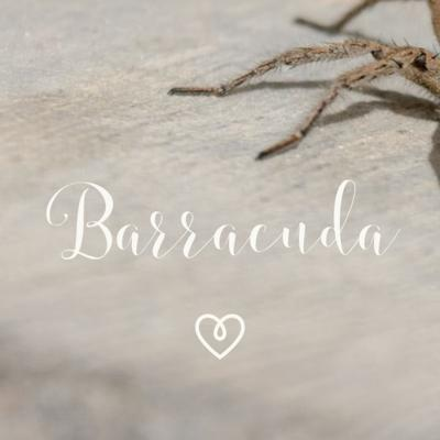 Cover art for Barracuda