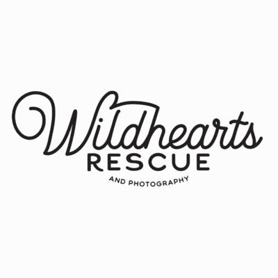 Cover art for Interview with Mel MacManiman of Wildhearts Rescue and Photography