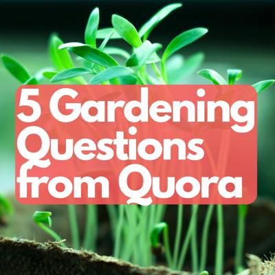 Cover art for 5 gardening questions from quora