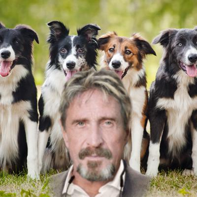 Cover art for #7 - Don't F**k With My Dogs (Bathwater Update & John McAfee)