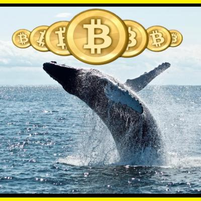Cover art for Crypto Whales are Rising