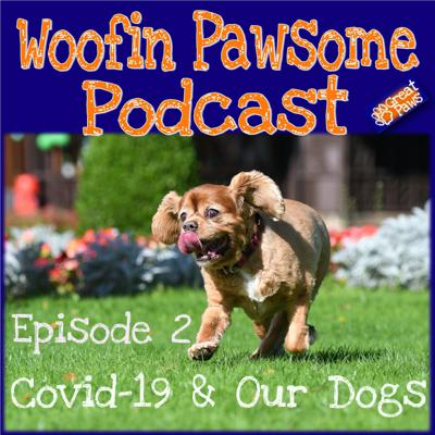 Cover art for Episode 2 - Covid-19 and your Dog