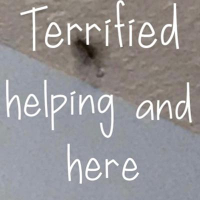 Terrified, helping, and here