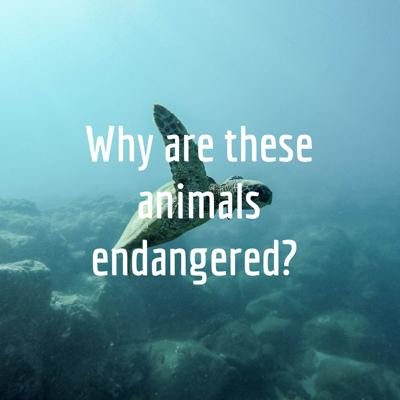 Why are these animals endangered?