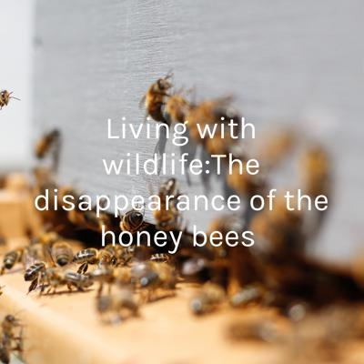 Living with wildlife:The disappearance of the honey bees