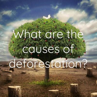 What are the causes of deforestation?