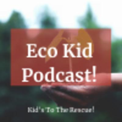 Eco-friendly living, sustainability, zero waste! Here we talk about it all!