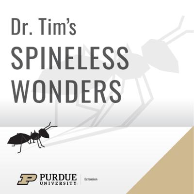 Dr. Tim's Spineless Wonders
