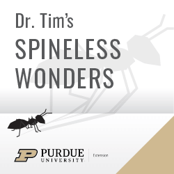Cover art for 'Did you hear the one about the huge camel spider? Well …'
