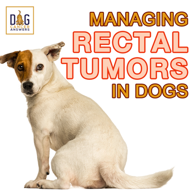 Cover art for Managing Rectal Tumors in Dogs │ Rewind with Dr. Demian Dressler and Dr. Sue Ettinger