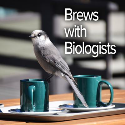 """Brews with Biologists is a podcast produced by Aeris Odysseys, a non-profit dedicated to the conservation and research of aerial migrant species, as well as a proud supporter of career biologists. """"Host-to-toast"""" Dr. Marla Steele gives listeners a chance to sit down with biologists and have a chat over a good brew. Tune in to get an in-depth look into the world of biology and the people dedicating their lives to the lab and field.  If you'd like to support this podcast, Aeris Odysseys, and the guests, you can donate on our website at AerisOdysseys.org/donate. If you specify the episode number or the name of the guest on our donation form, fifty percent of the proceeds will go to the guest to support their scientific endeavors."""