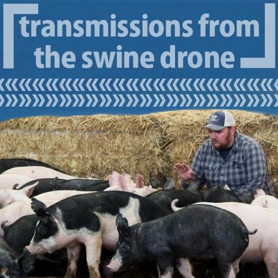 Cover art for 15: 「Transmissions from the Swine Drone」